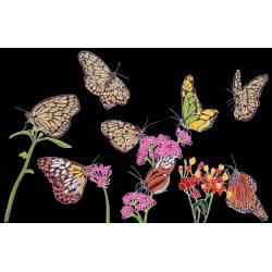 papillon noir