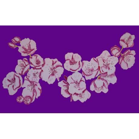 cerisier violet